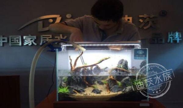 Aquascape -- 40cm Aquatic Plants