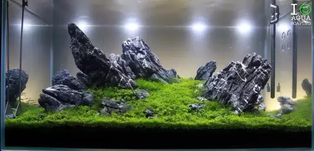 Aquascape With Iwagumi Style
