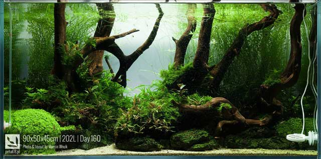 Aquascape Forest Path