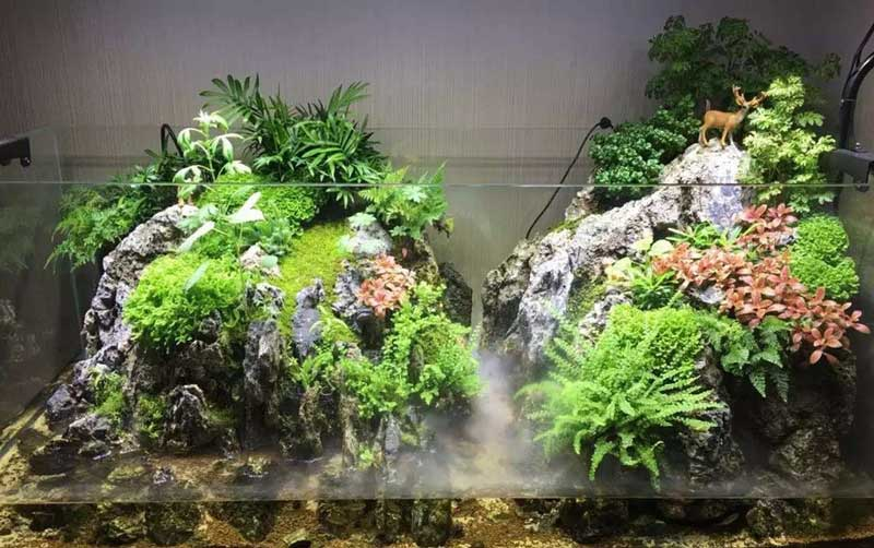 Paludarium Amp Shop Enjoy And Delight