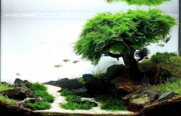 Creative  Artificial Tree Landscape