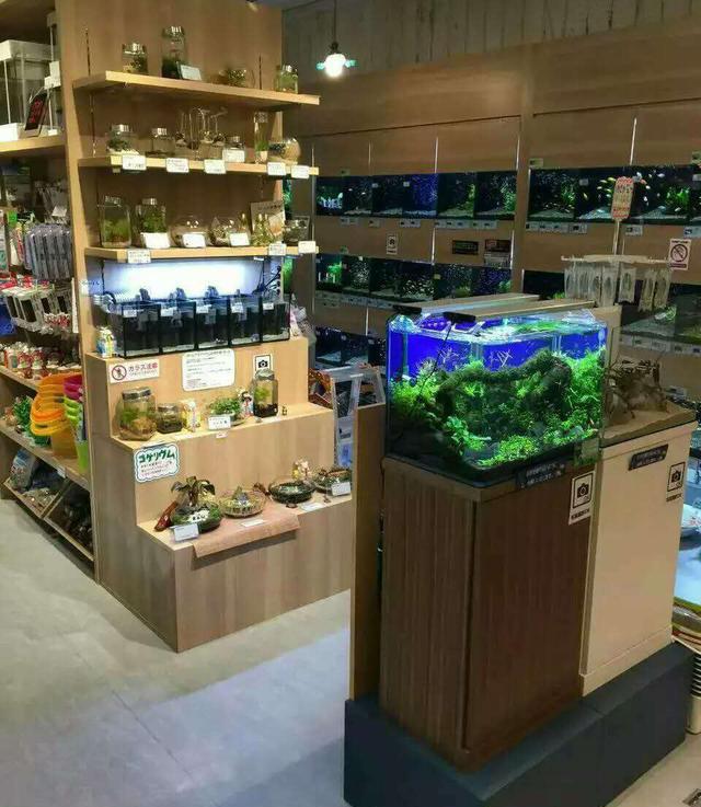Foreign Aquascape Shop Display