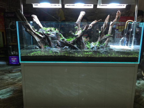 Aquascape -- 180cm Aquatic Plants