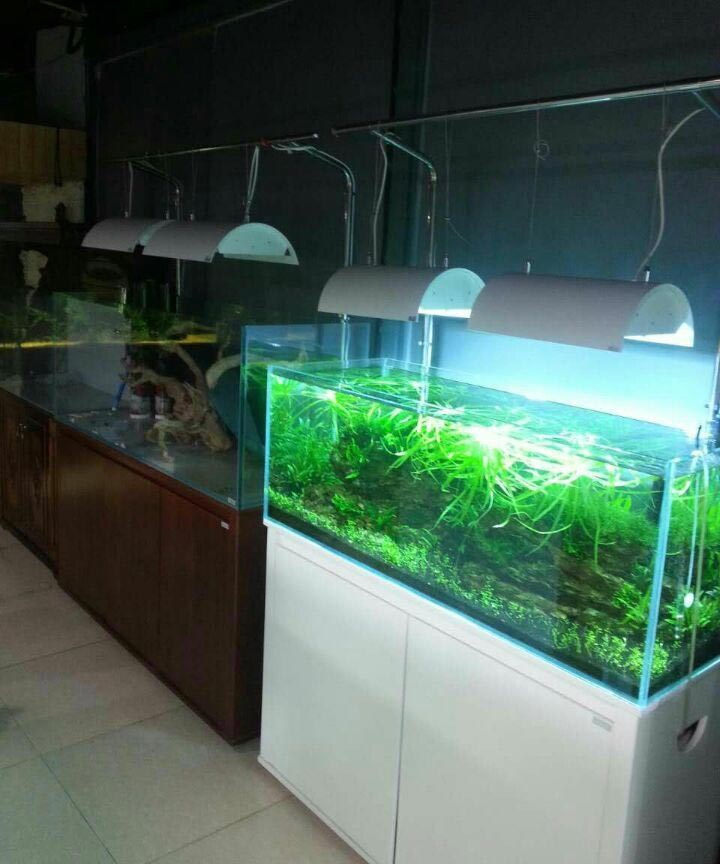 Aquarium shop