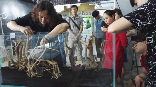 Aquarist Xuehai arri