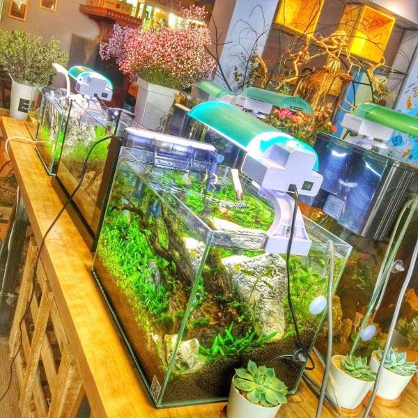 China Distributors, Aquatic shop